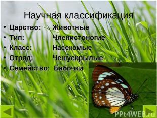 Научная классификация Царство: Животные Тип: Членистоногие Класс: Насекомые Отря
