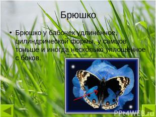 Брюшко Брюшко у бабочек удлинённое, цилиндрической формы, у самцов тоньше и иног