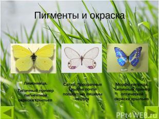 Лимонница. Типичный пример пигментной окраски крыльев Сатир. Прозрачные крылья п