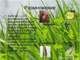 Размножение Бабочки — это насекомые с так называемым полным циклом превращений.