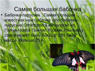 Самая большая бабочка Бабочка-парусник ; Самая большая известная нам бабочка -эт