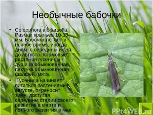 Необычные бабочки Coleophora albitarsella. Размах крыльев 10-13 мм. Бабочка лета