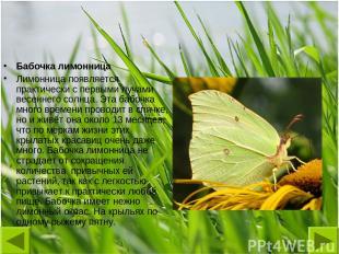 Бабочка лимонница Лимонница появляется практически с первыми лучами весеннего со