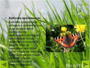 Бабочка крапивница Бабочка крапивница активна с ранней весны и до начало июня. З