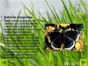 Бабочка траурница Бабочка траурница, не смотря на своё название, настоящая модни