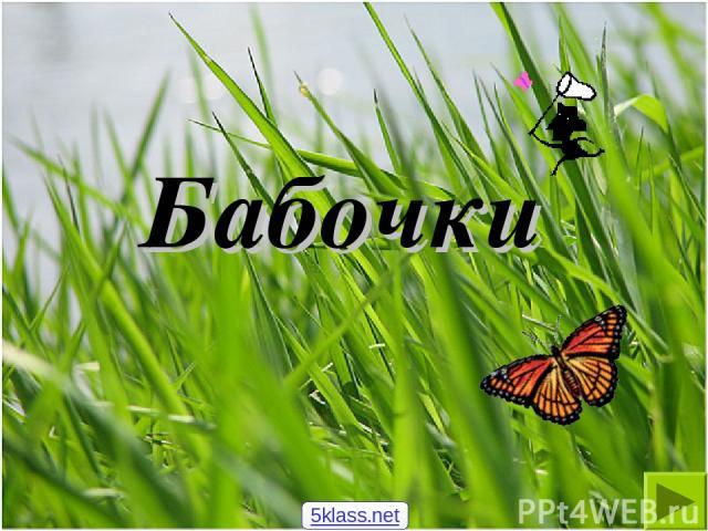 Бабочки 5klass.net
