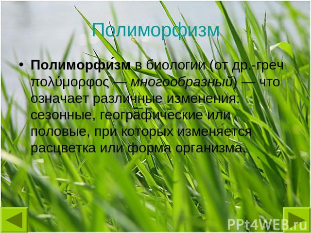 Полиморфизм Полиморфи зм в биологии (от др.-греч. πολύμορφος— многообразный)— что означает различные изменения: сезонные, географические или половые, при которых изменяется расцветка или форма организма.