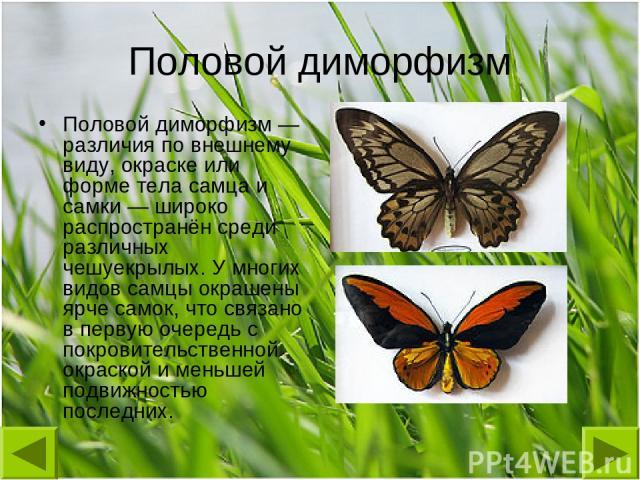 Половой диморфизм Половой диморфизм— различия по внешнему виду, окраске или форме тела самца и самки— широко распространён среди различных чешуекрылых. У многих видов самцы окрашены ярче самок, что связано в первую очередь с покровительственной ок…