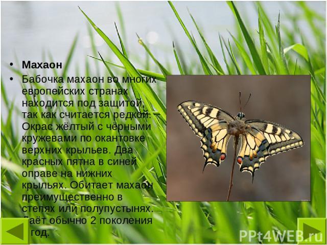 Махаон Бабочка махаон во многих европейских странах находится под защитой, так как считается редкой. Окрас жёлтый с чёрными кружевами по окантовке верхних крыльев. Два красных пятна в синей оправе на нижних крыльях. Обитает махаон преимущественно в …
