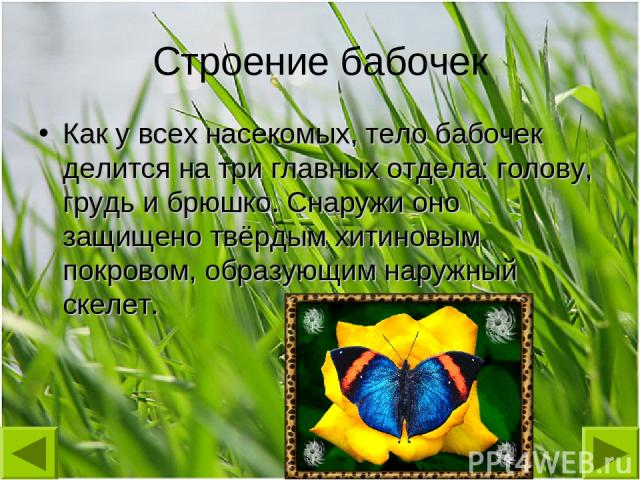 Строение бабочек Как у всех насекомых, тело бабочек делится на три главных отдела: голову, грудь и брюшко. Снаружи оно защищено твёрдым хитиновым покровом, образующим наружный скелет.