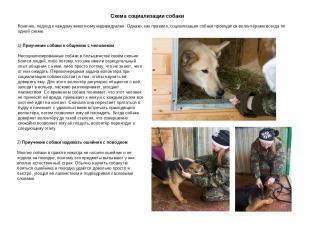Схема социализации собаки Конечно, подход к каждому животному индивидуален. Одна