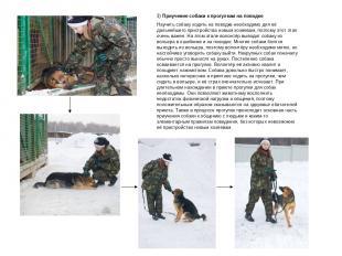 3) Приучение собаки к прогулкам на поводке Научить собаку ходить на поводке необ