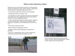 Забота о своих подопечных собаках Практически у всех волонтёров в приюте есть оп