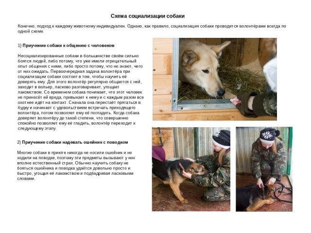 Схема социализации собаки Конечно, подход к каждому животному индивидуален. Однако, как правило, социализация собаки проводится волонтёрами всегда по одной схеме. Приучение собаки к общению с человеком Несоциализированные собаки в большинстве своём …