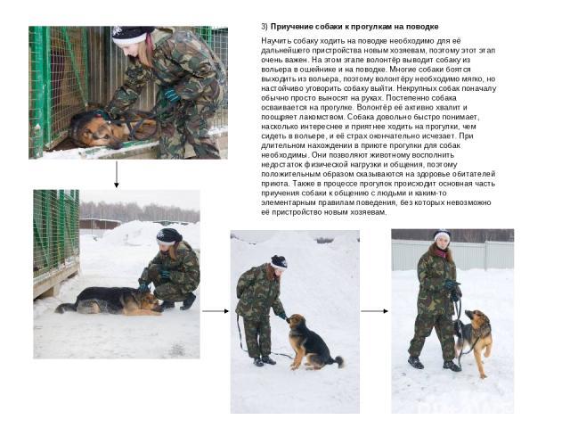 3) Приучение собаки к прогулкам на поводке Научить собаку ходить на поводке необходимо для её дальнейшего пристройства новым хозяевам, поэтому этот этап очень важен. На этом этапе волонтёр выводит собаку из вольера в ошейнике и на поводке. Многие со…