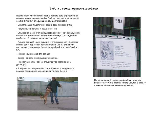 Забота о своих подопечных собаках Практически у всех волонтёров в приюте есть определённое количество подопечных собак. Забота опекуна о подопечной собаке включает следующие виды деятельности: Социализация подопечной собаки (если необходима) Регуляр…