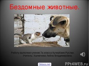 Бездомные животные. Работу выполнил ученик 7а класса Кучербаев Руслан. Учитель: