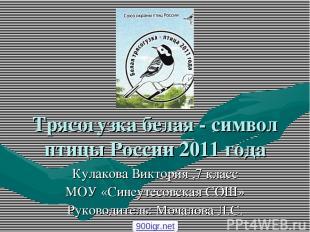 Трясогузка белая - символ птицы России 2011 года Кулакова Виктория ,7 класс МОУ