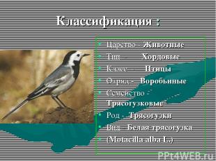 Классификация : Царство - Животные Тип - Хордовые Класс - Птицы Отряд - Воробьин