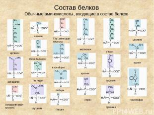 Состав белков Обычные аминокислоты, входящие в состав белков аланин аргинин аспа