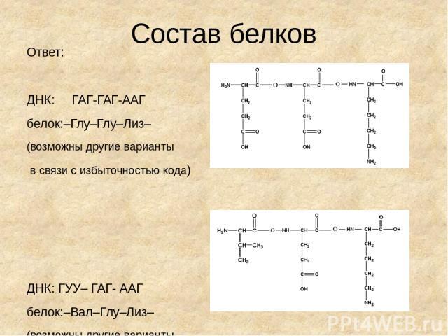 Состав белков Ответ: ДНК: ГАГ-ГАГ-ААГ белок:–Глу–Глу–Лиз– (возможны другие варианты в связи с избыточностью кода) ДНК: ГУУ– ГАГ- ААГ белок:–Вал–Глу–Лиз– (возможны другие варианты в связи с избыточностью кода)