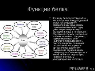 Функции белка Функции белков чрезвычайно многообразны. Каждый данный белок как в