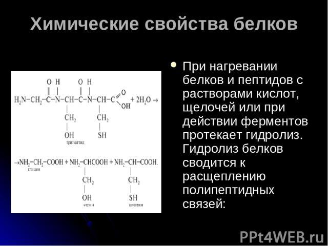 Химические свойства белков При нагревании белков и пептидов с растворами кислот, щелочей или при действии ферментов протекает гидролиз. Гидролиз белков сводится к расщеплению полипептидных связей: