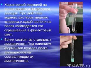 Характерной реакцией на белок является биуретовая реакция. При действии водного