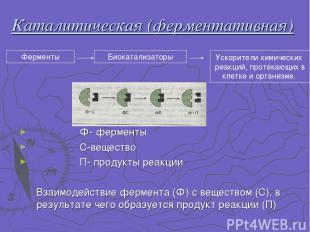 Каталитическая (ферментативная) Ф- ферменты С-вещество П- продукты реакции Взаим