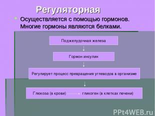 Регуляторная Осуществляется с помощью гормонов. Многие гормоны являются белками.