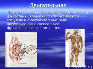 Двигательная Проявляется при работе мускулатуры человека и животных. В мышечных