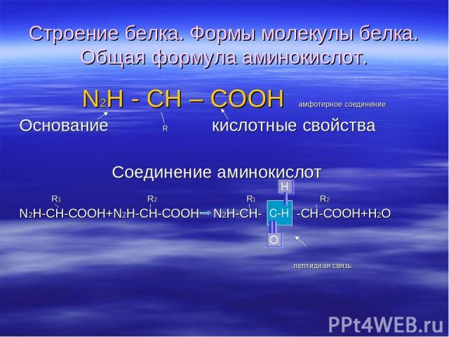 Строение белка. Формы молекулы белка. Общая формула аминокислот. N2H - CH – COOH амфотерное соединение Основание R кислотные свойства Соединение аминокислот R1 R2 R1 R2 N2H-CH-COOH+N2H-CH-COOH N2H-CH- -CH-COOH+H2O пептидная связь C-H Н О