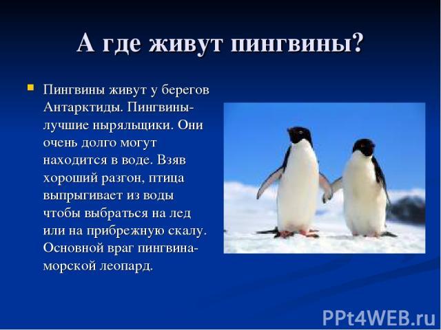 А где живут пингвины? Пингвины живут у берегов Антарктиды. Пингвины-лучшие ныряльщики. Они очень долго могут находится в воде. Взяв хороший разгон, птица выпрыгивает из воды чтобы выбраться на лед или на прибрежную скалу. Основной враг пингвина-морс…