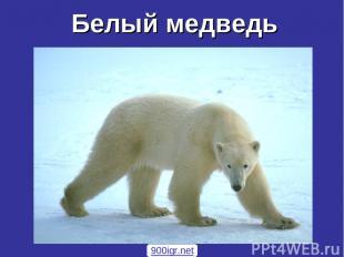 Белый медведь 900igr.net