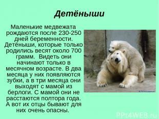 Детёныши Маленькие медвежата рождаются после 230-250 дней беременности. Детёныши