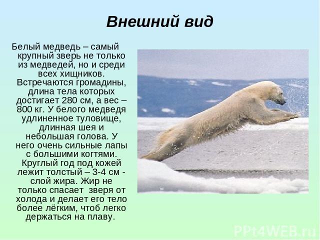 Внешний вид Белый медведь – самый крупный зверь не только из медведей, но и среди всех хищников. Встречаются громадины, длина тела которых достигает 280 см, а вес – 800 кг. У белого медведя удлиненное туловище, длинная шея и небольшая голова. У него…
