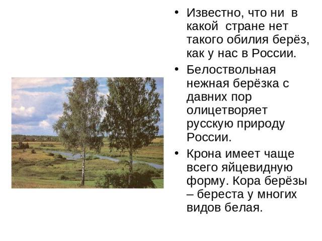 Известно, что ни в какой стране нет такого обилия берёз, как у нас в России. Белоствольная нежная берёзка с давних пор олицетворяет русскую природу России. Крона имеет чаще всего яйцевидную форму. Кора берёзы – береста у многих видов белая.