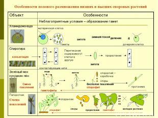 Особенности полового размножения низших и высших споровых растений зигота зимний