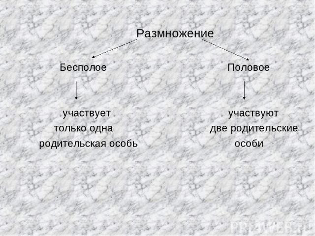 Размножение Бесполое Половое участвует участвуют только одна две родительские родительская особь особи