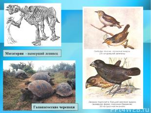 Мегатерия - вымерший ленивец Галапагосские черепахи