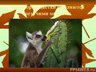 Некоторые цветки опыляются летучими мышами