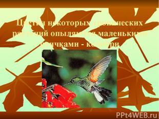 Цветки некоторых тропических растений опыляются маленькими птичками - колибри