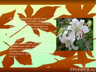 Лилия Об этих прекрасных цветах было сложено много историй, мифов и легенд. Ее н
