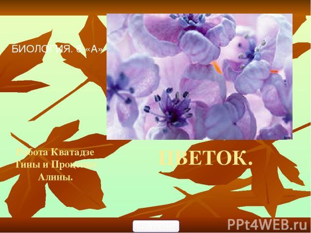 ЦВЕТОК. Работа Кватадзе Тины и Проценко Алины. БИОЛОГИЯ. 6 «А» 5klass.net