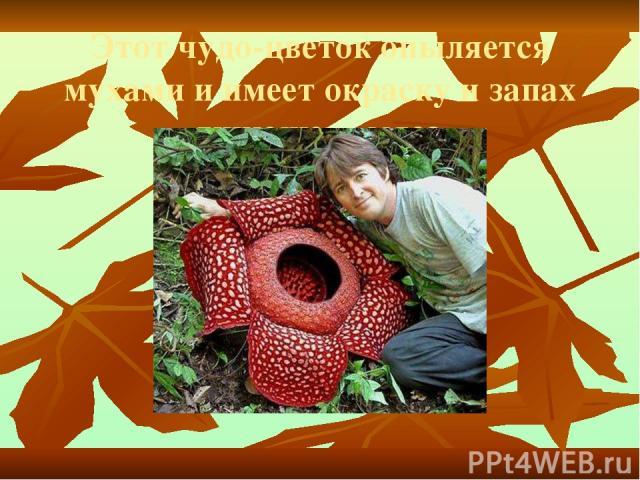 Этот чудо-цветок опыляется мухами и имеет окраску и запах гниющего мяса