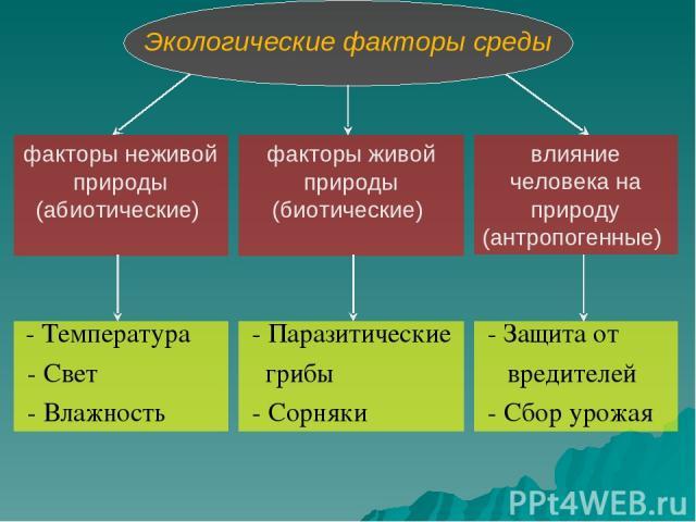 Экологические факторы среды факторы неживой природы (абиотические) факторы живой природы (биотические) влияние человека на природу (антропогенные) - Температура - Свет - Влажность - Паразитические грибы - Сорняки - Защита от вредителей - Сбор урожая