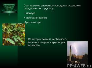Соотношение элементов природных экосистем определяет их структуру: Видовую Прост