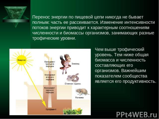 Перенос энергии по пищевой цепи никогда не бывает полным: часть ее рассеивается. Изменение интенсивности потоков энергии приводит к характерным соотношениям численности и биомассы организмов, занимающих разные трофические уровни. Чем выше трофически…
