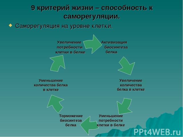 9 критерий жизни – способность к саморегуляции. Саморегуляция на уровне клетки.