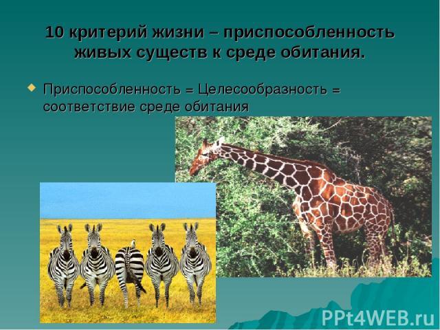 10 критерий жизни – приспособленность живых существ к среде обитания. Приспособленность = Целесообразность = соответствие среде обитания